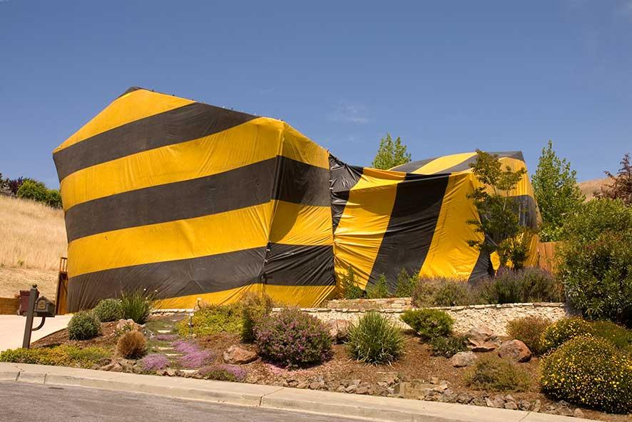 Desert home tented for termite eradication